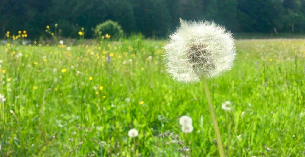 eventi-costellazioni-familiari-coaching-mindfulness